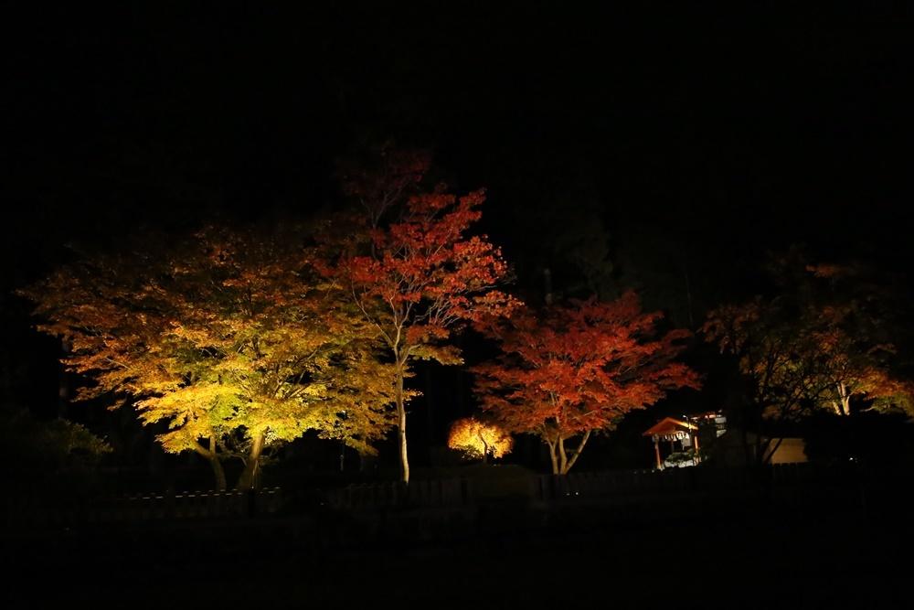 紅葉ライトアップ_c0111229_20114267.jpg