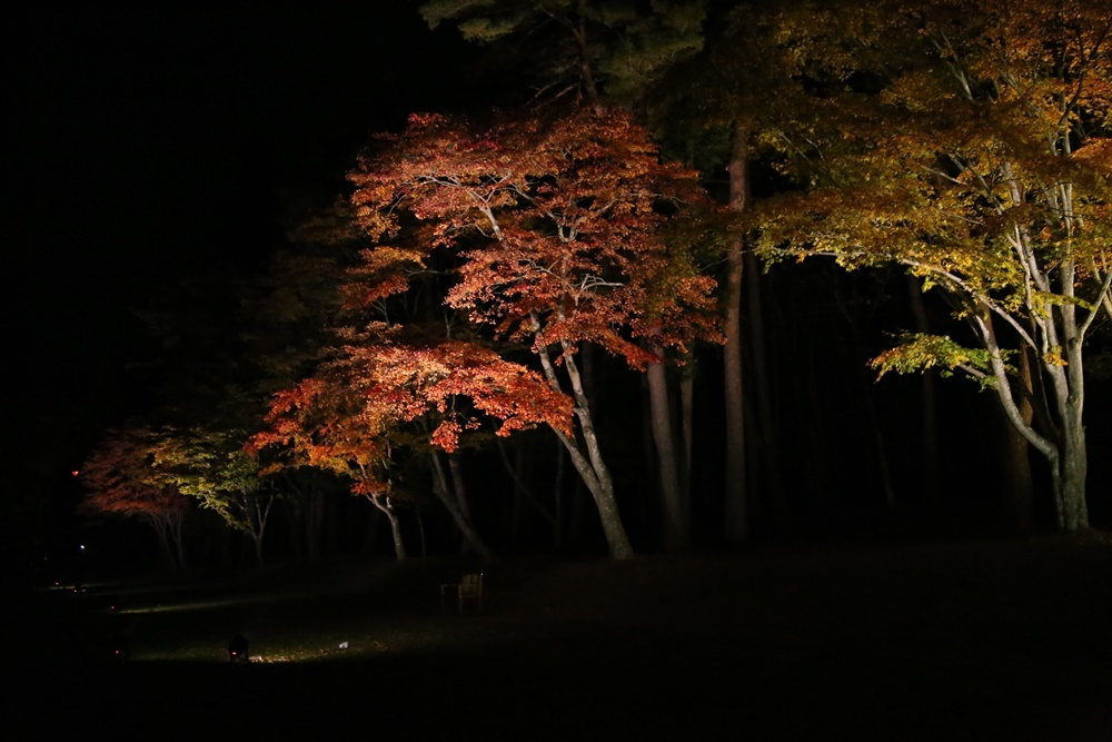 紅葉ライトアップ_c0111229_20120261.jpg