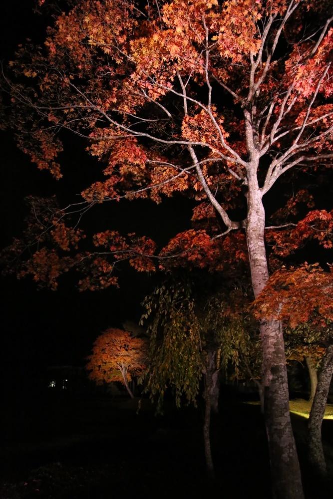 紅葉ライトアップ_c0111229_20121028.jpg