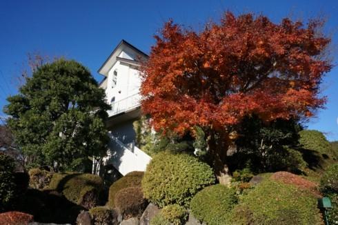 紅葉は櫻の葉から始まる_f0055131_11123791.jpg