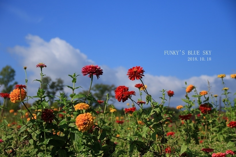 秋のお花畑・Ⅱ_c0145250_09263838.jpg