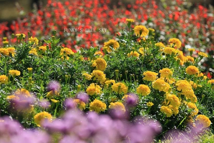 秋のお花畑・Ⅱ_c0145250_09272224.jpg
