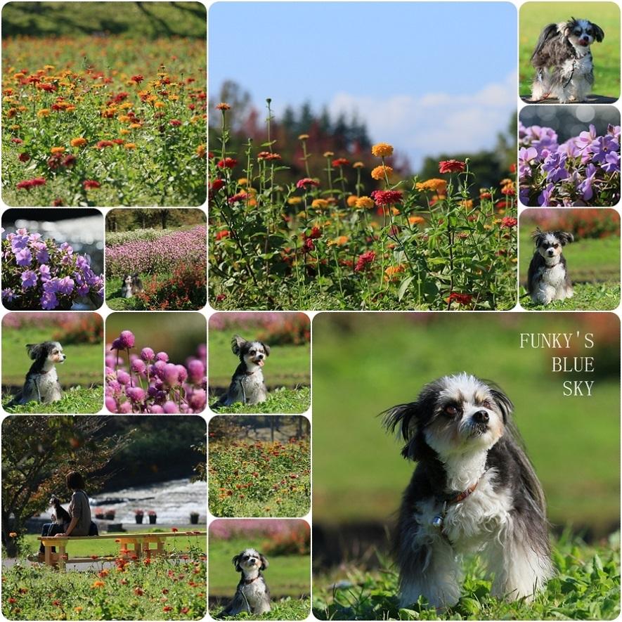 秋のお花畑・Ⅱ_c0145250_09275855.jpg