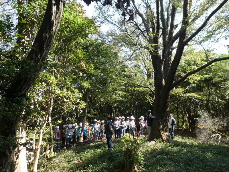 東光小学校4年生遠足「里山体験」サポート_c0108460_16273493.jpg