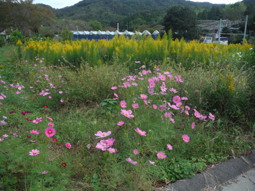 朝サイクリング_b0332867_01052838.jpg