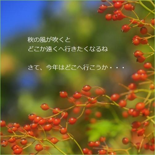 b0154475_14081047.jpg