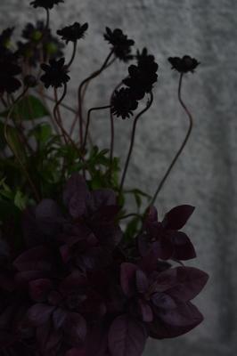 秋のいろ、いろいろ_a0252678_12222290.jpg