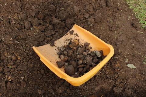 国バラで見たポタジェ&サツマイモ収穫♪_e0341606_23263243.jpg