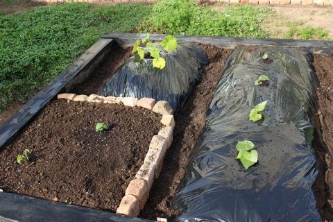国バラで見たポタジェ&サツマイモ収穫♪_e0341606_23330246.jpg