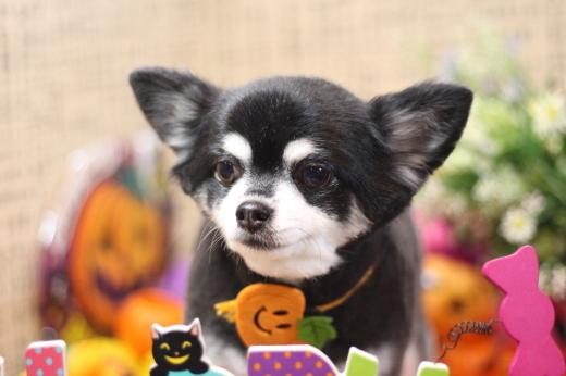 10月25日ご来店のお客様です!!_b0130018_20081515.jpg