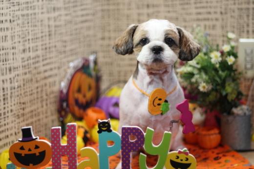 10月25日ご来店のお客様です!!_b0130018_20114967.jpg
