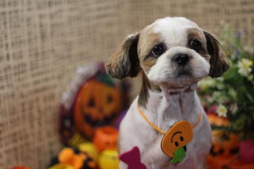 10月25日ご来店のお客様です!!_b0130018_20120704.jpg