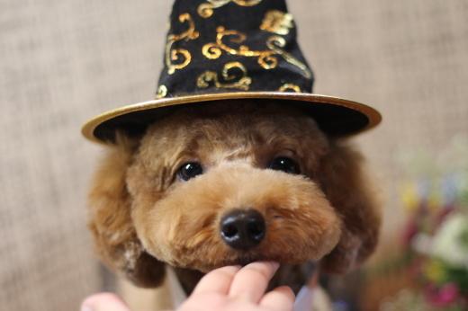 10月26日にご来店のワンちゃんです!!_b0130018_22205382.jpg
