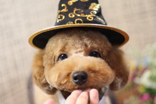10月26日にご来店のワンちゃんです!!_b0130018_22211674.jpg