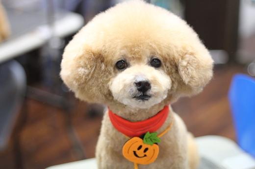 10月26日にご来店のワンちゃんです!!_b0130018_22284837.jpg