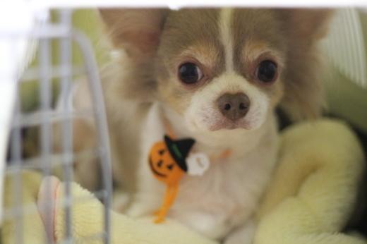 10月26日にご来店のワンちゃんです!!_b0130018_22321711.jpg