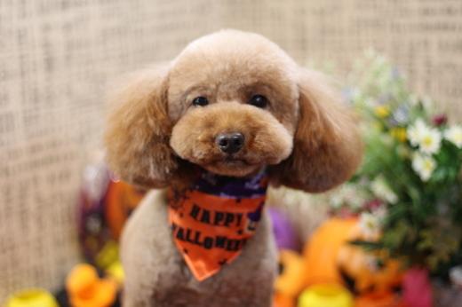 10月26日にご来店のワンちゃんです!!_b0130018_22341519.jpg
