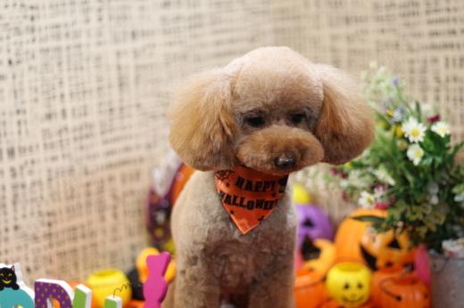 10月26日にご来店のワンちゃんです!!_b0130018_22343833.jpg