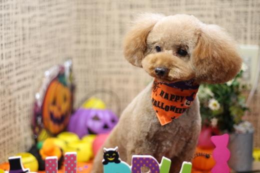 10月26日にご来店のワンちゃんです!!_b0130018_22351017.jpg