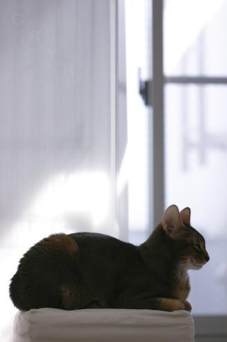 [猫的]朝の休息_e0090124_21225870.jpg