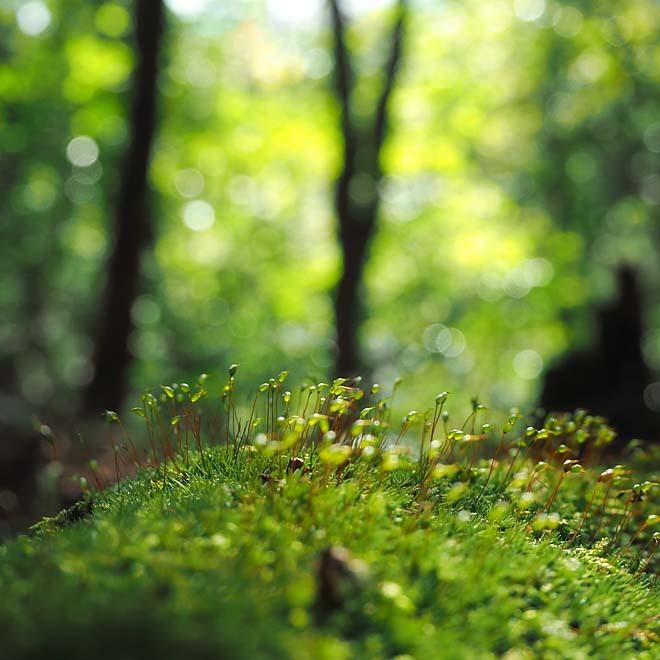 森歩き_c0067040_14182576.jpg