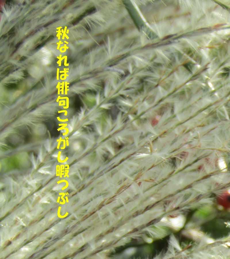 f0117041_05535437.jpg