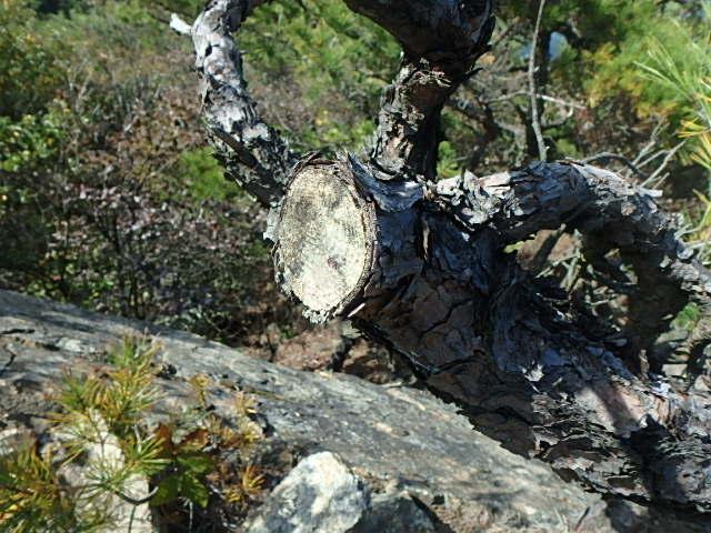 蓬山峡の秋 おじさんのさぼり_f0334143_829132.jpg