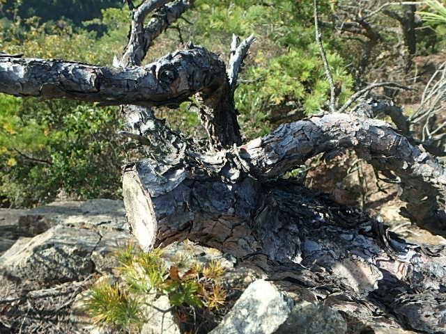 蓬山峡の秋 おじさんのさぼり_f0334143_8312964.jpg