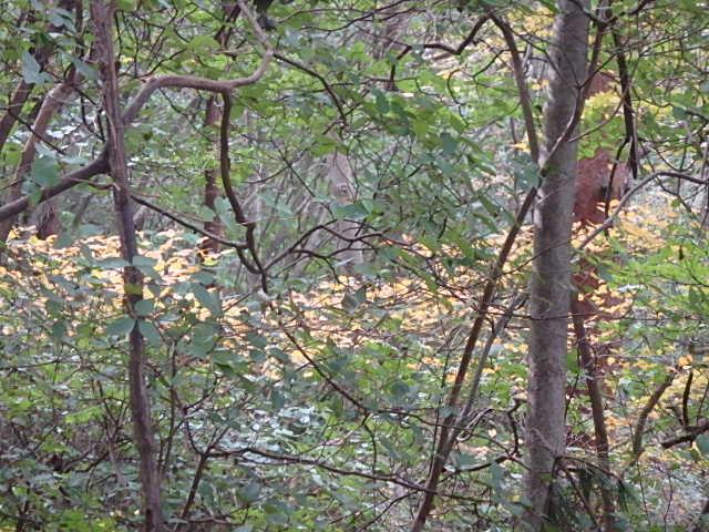 蓬山峡の秋 おじさんのさぼり_f0334143_837149.jpg