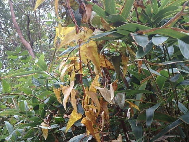 蓬山峡の秋 おじさんのさぼり_f0334143_841266.jpg