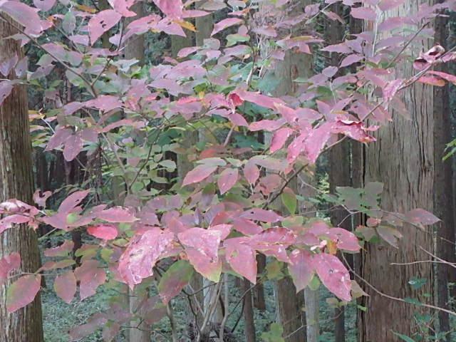 蓬山峡の秋 おじさんのさぼり_f0334143_8423723.jpg
