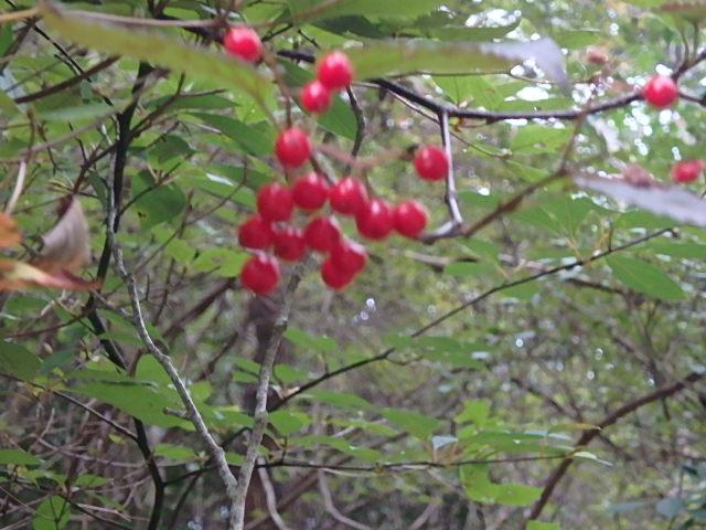 蓬山峡の秋 おじさんのさぼり_f0334143_843144.jpg