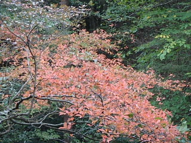 蓬山峡の秋 おじさんのさぼり_f0334143_8453494.jpg