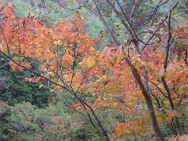 蓬山峡の秋 おじさんのさぼり_f0334143_8454322.jpg