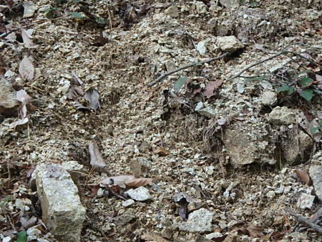 蓬山峡の秋 おじさんのさぼり_f0334143_845732.jpg