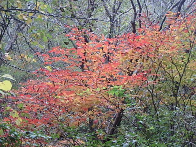 蓬山峡の秋 おじさんのさぼり_f0334143_8462795.jpg