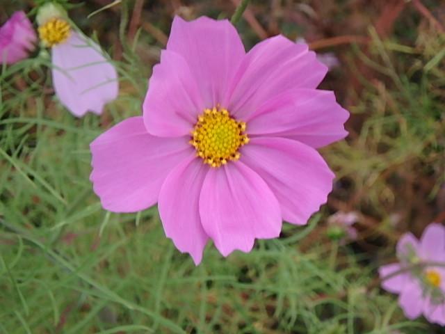 蓬山峡の秋 おじさんのさぼり_f0334143_847030.jpg