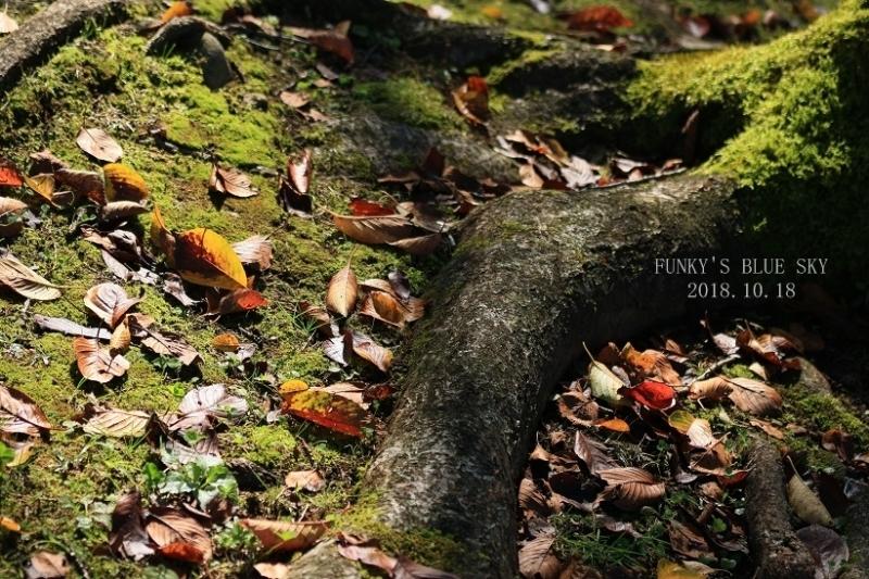 秋を感じる_c0145250_09331551.jpg