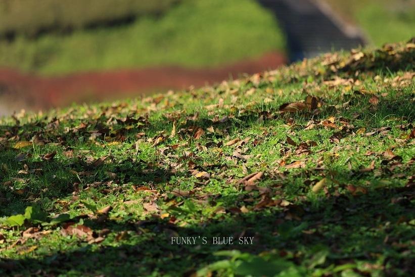 秋を感じる_c0145250_09332053.jpg