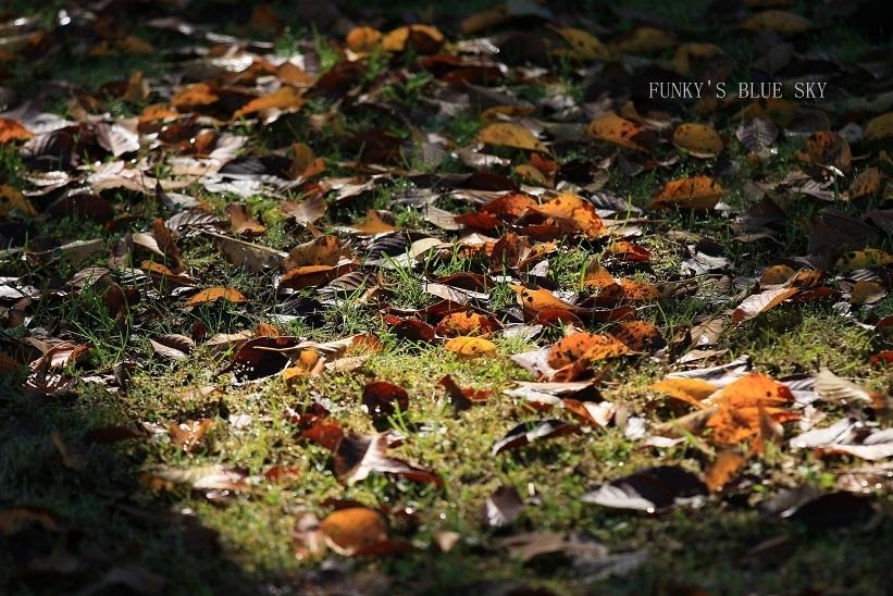秋を感じる_c0145250_09332455.jpg