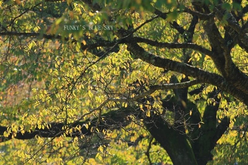 秋を感じる_c0145250_09333048.jpg