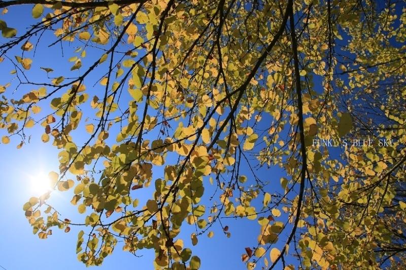 秋を感じる_c0145250_09333418.jpg