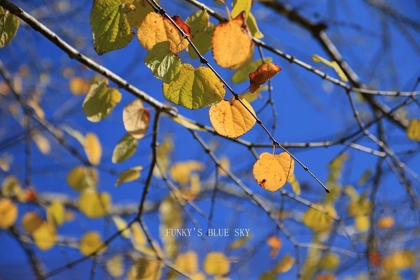 秋を感じる_c0145250_09333779.jpg