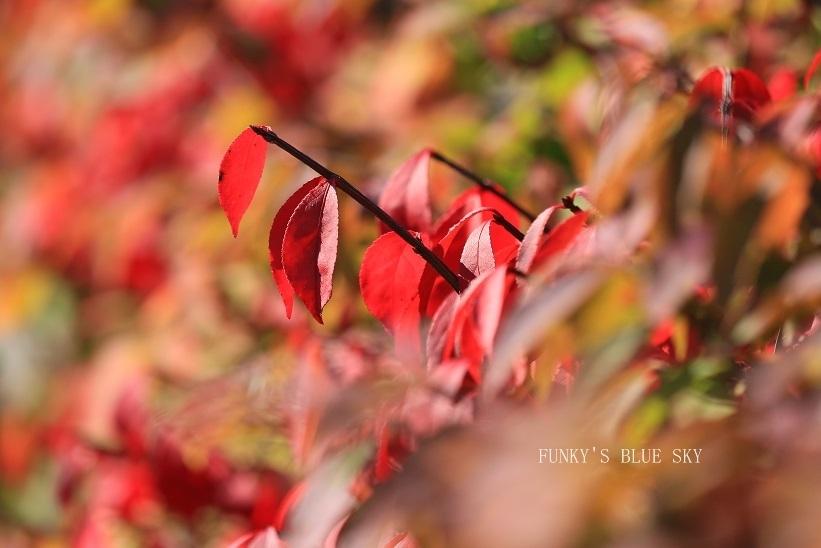 秋を感じる_c0145250_09334729.jpg