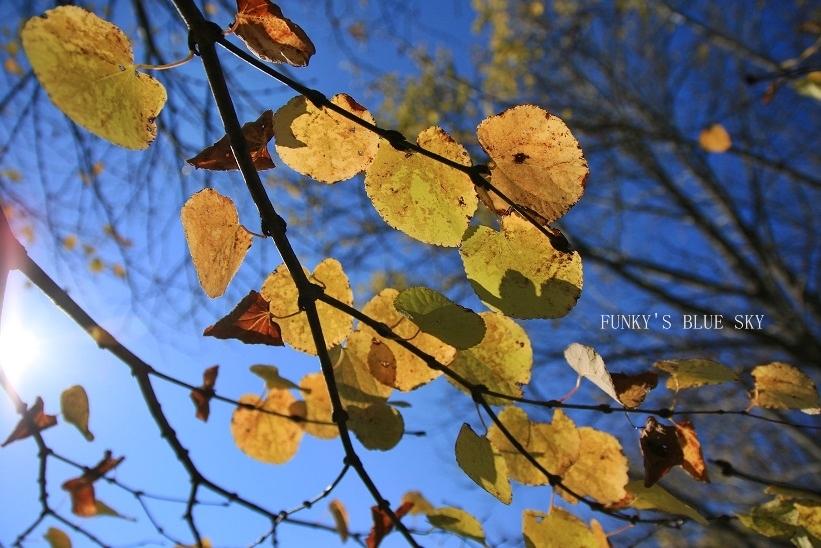秋を感じる_c0145250_09335482.jpg