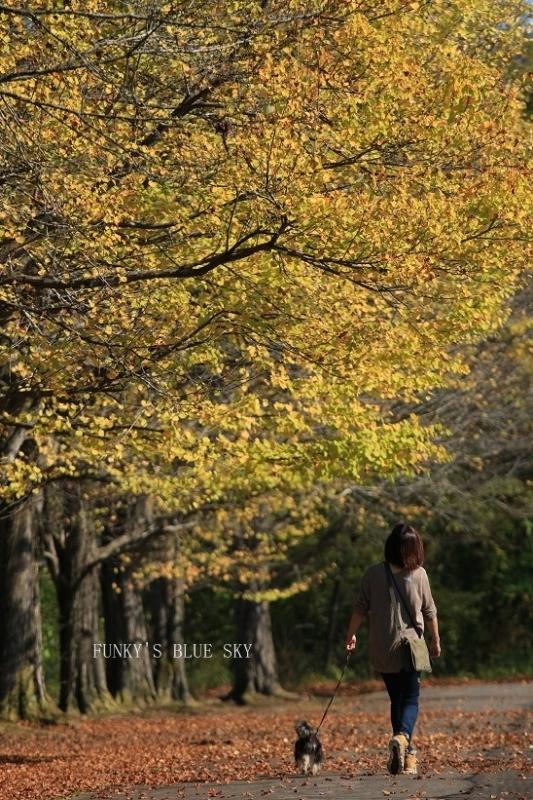 秋を感じる_c0145250_09335956.jpg