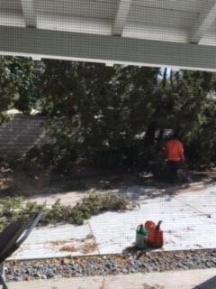 木を切る人_e0350971_11103952.jpg