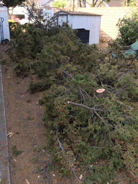 木を切る人_e0350971_11225573.jpg