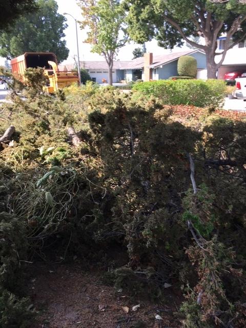 木を切る人_e0350971_11241893.jpg