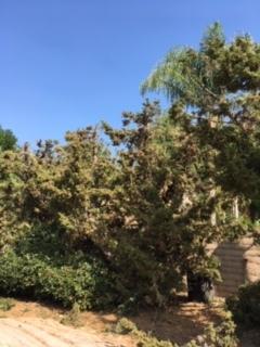 木を切る人_e0350971_11260468.jpg